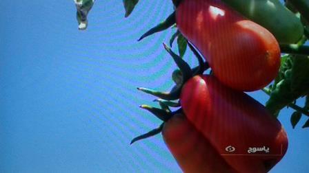 رونمایی از ۷ محصول جدید کشاورزی