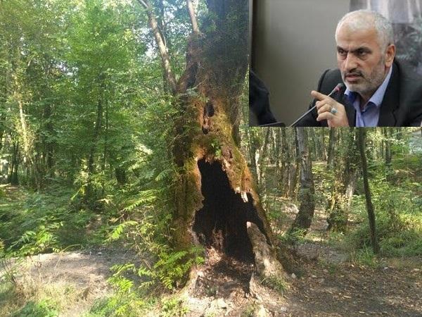 مسدود شدن دستاندازی سودجویان به اراضی منطقه جنگلی